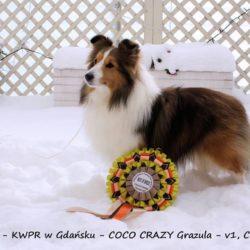 Coco Grazula FCI