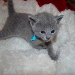 Kocięta znalazły nowe domy