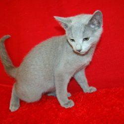 Kocięta Bomili szukają domu – aktualizacja