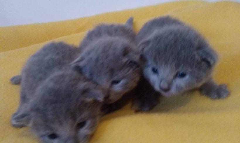 Urodziły się kocięta – zapraszamy do rezerwacji